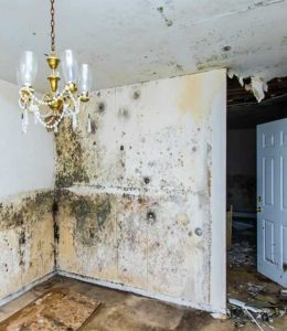 mold removal company rapid restoration