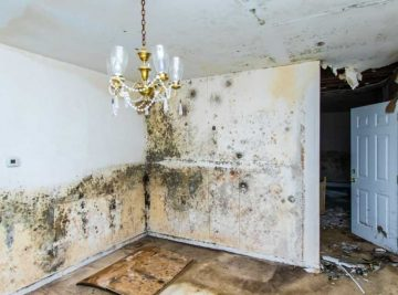 Mold remediation company Boca Raton